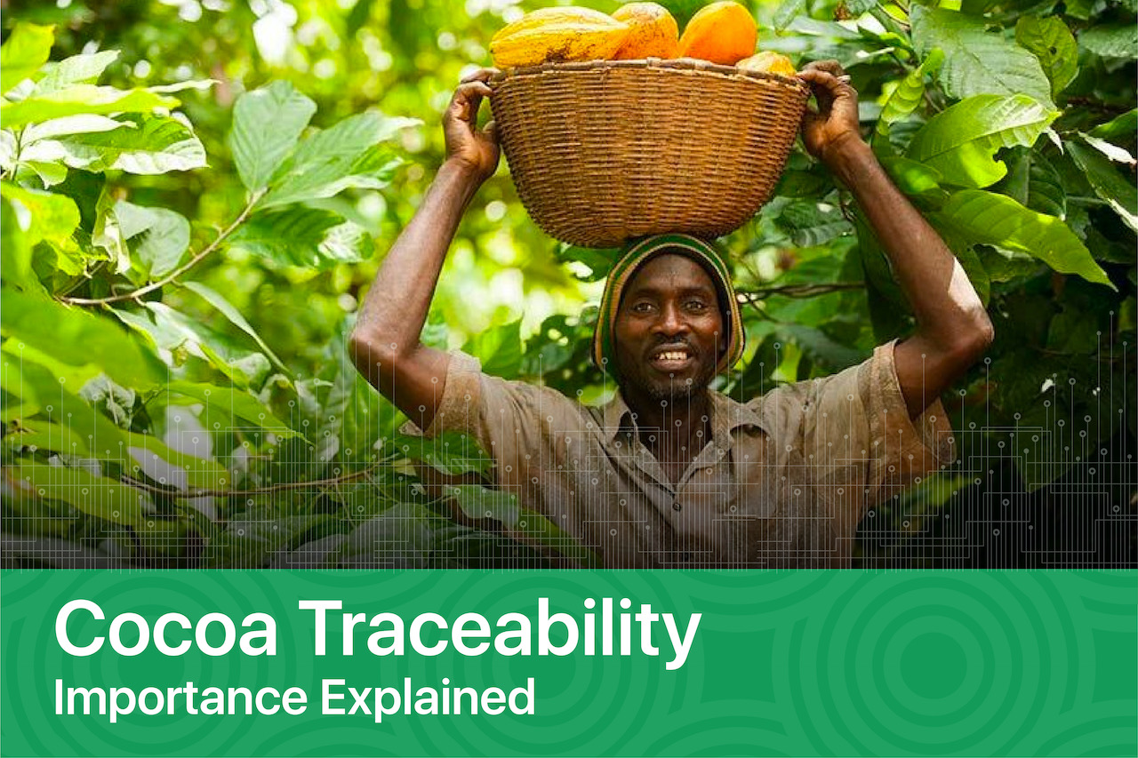 Cocoa Traceability – Importance Explained
